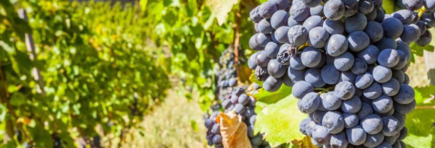 Avenir foncier viticole